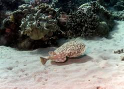 Photos Plongée Sinai Bay 2