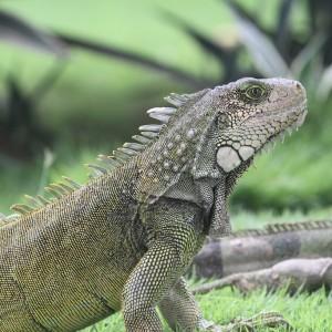 Photos Galapagos 1