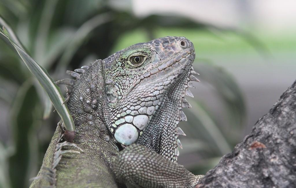 Photos Galapagos 12