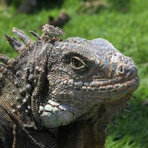 Photos Galapagos 13