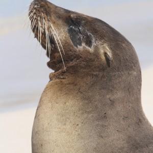 Photos Galapagos 17