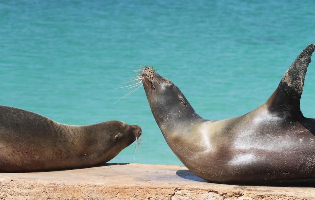 Photos Galapagos 18