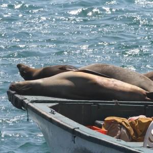 Photos Galapagos 19