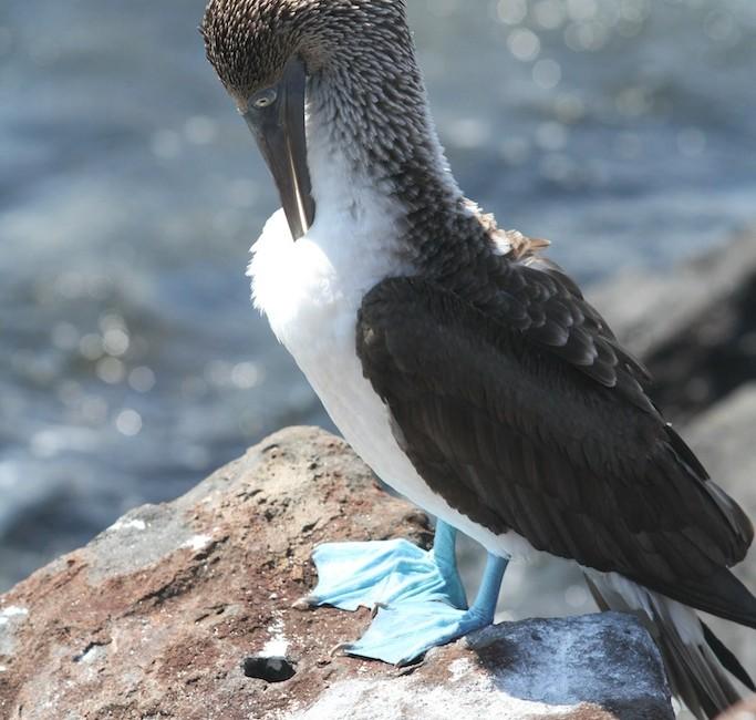 Photos Galapagos 2