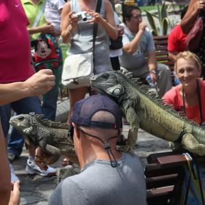 Photos Galapagos 20
