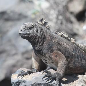 Photos Galapagos 3
