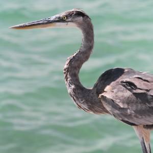 Photos Galapagos 4