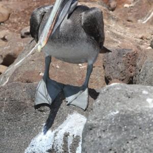 Photos Galapagos 5