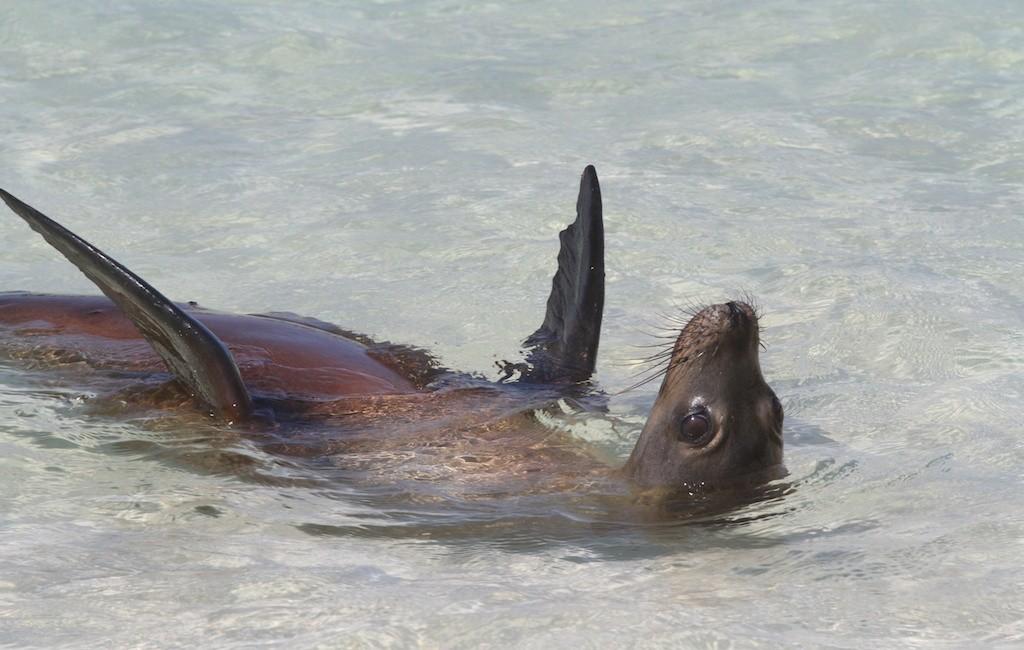 Photos Galapagos 6
