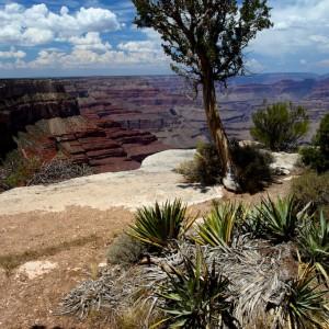 Photos Grant Canyon 9