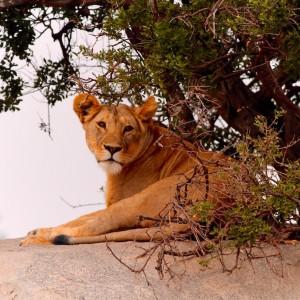 Photos Serengeti 19