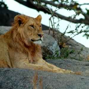 Photos Serengeti 20