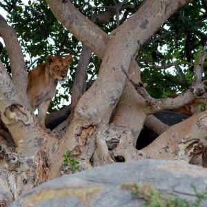 Photos Serengeti 21