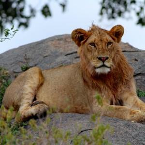 Photos Serengeti 23