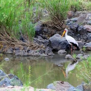 Photos Serengeti 25