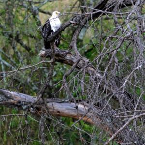 Photos Serengeti 26