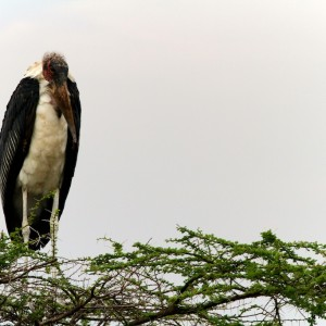 Photos Serengeti 27