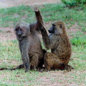 Photos Serengeti 29