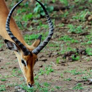 Photos Serengeti 30