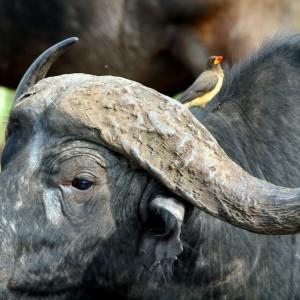 Photos Serengeti 33
