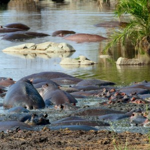 Photos Serengeti 36