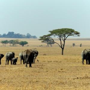 Photos Serengeti 37
