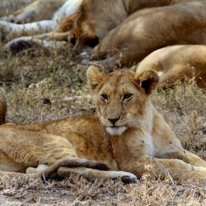 Photos Serengeti 38