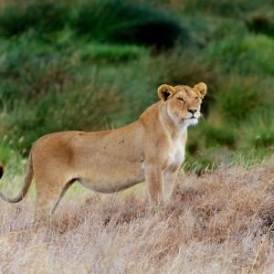 Photos Serengeti 39