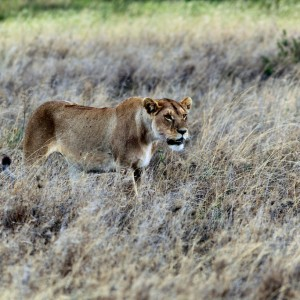 Photos Serengeti 40