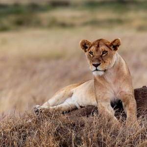 Photos Serengeti 41