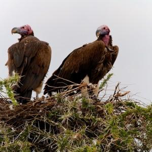 Photos Serengeti 42