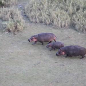 Photos Serengeti 5