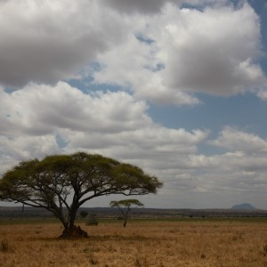 Photos Tarangire & Arusha 10