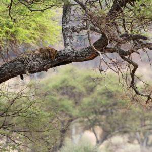 Photos Tarangire & Arusha 12