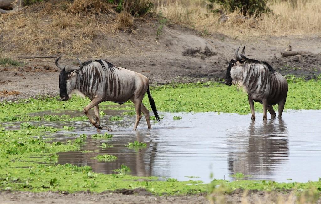 Photos Tarangire & Arusha 2