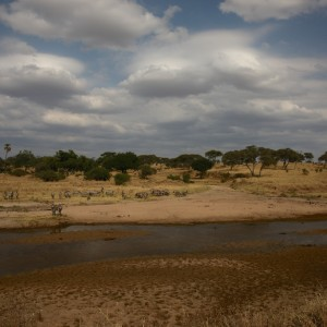 Photos Tarangire & Arusha 21