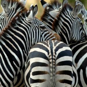 Photos Tarangire & Arusha 24