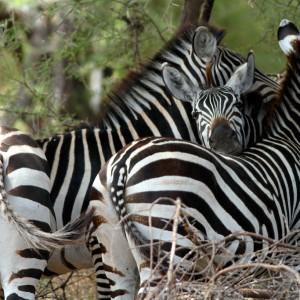 Photos Tarangire & Arusha 25
