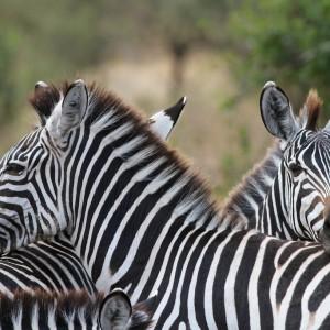 Photos Tarangire & Arusha 26