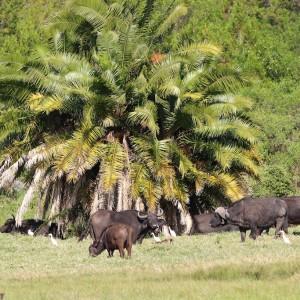 Photos Tarangire & Arusha 28