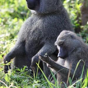 Photos Tarangire & Arusha 29