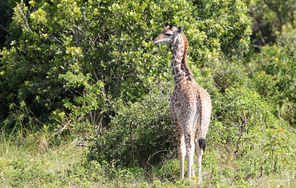 Photos Tarangire & Arusha 31