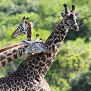 Photos Tarangire & Arusha 32