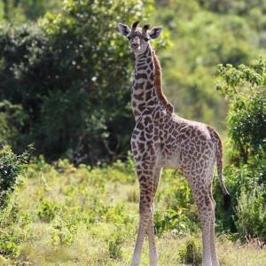 Photos Tarangire & Arusha 35