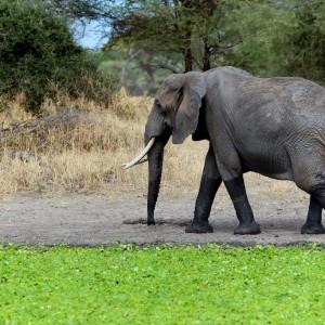 Photos Tarangire & Arusha 4