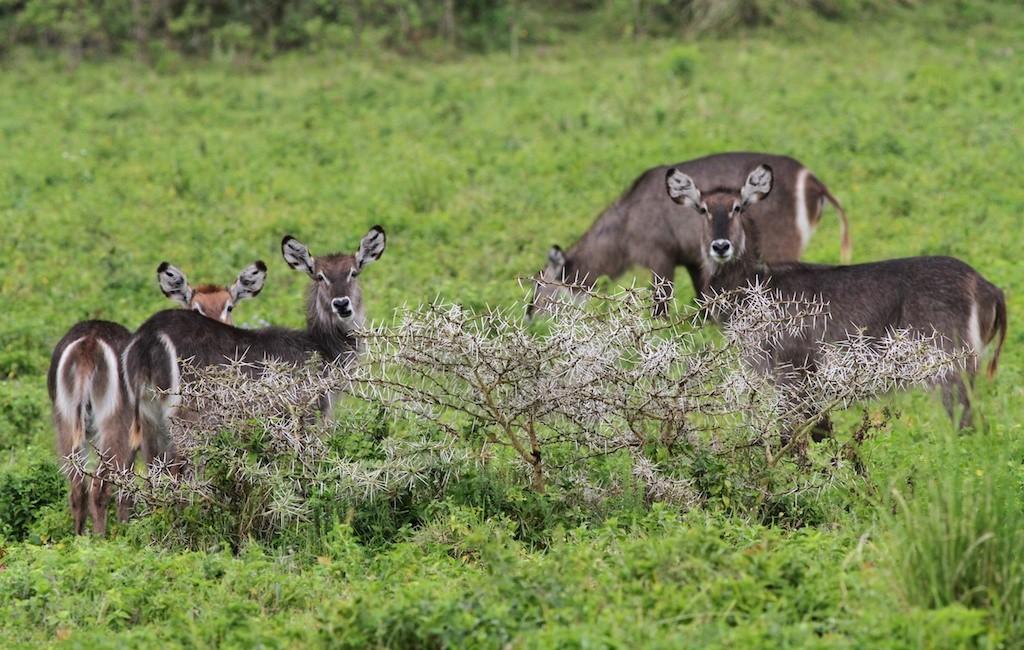 Photos Tarangire & Arusha 40