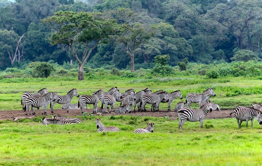 Photos Tarangire & Arusha 41