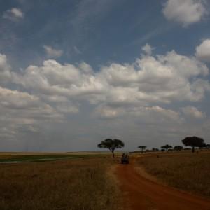 Photos Tarangire & Arusha 5