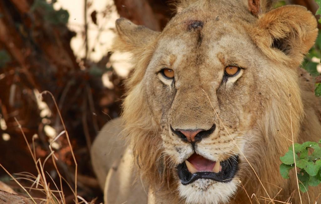 Photos Tarangire & Arusha 6