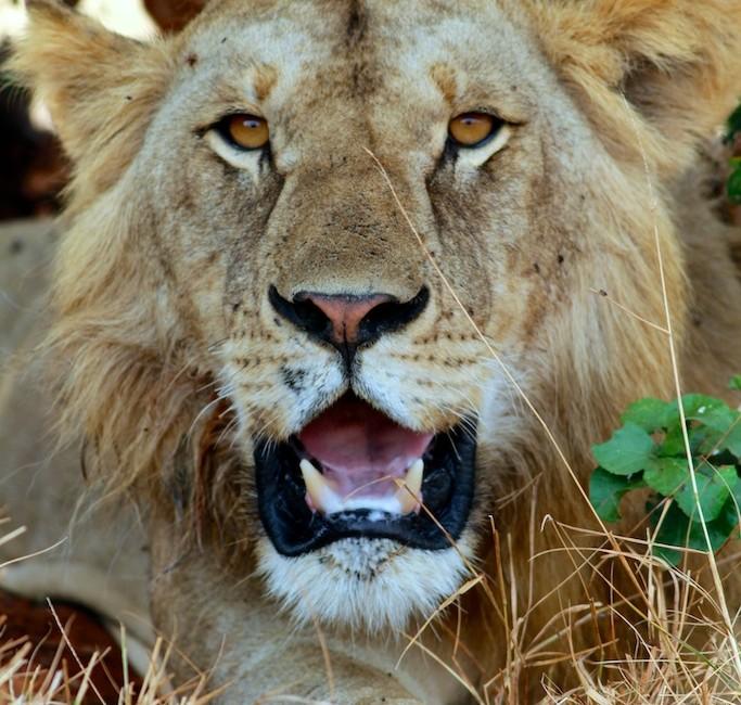 Photos Tarangire & Arusha 7